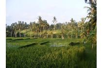 Tanah Siap Untuk Dibangun Hotel di Ubud