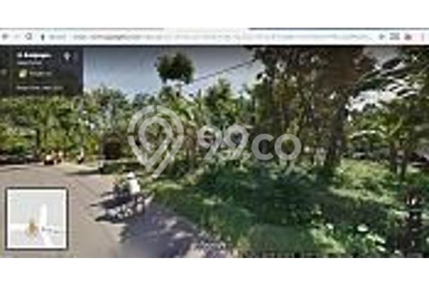 Tanah Kebun Produktif dan Tanah Kavling Pinggir Jalan Bintoro Jember 16510276