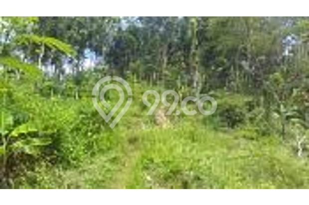 Tanah Kebun Produktif dan Tanah Kavling Pinggir Jalan Bintoro Jember 16510278