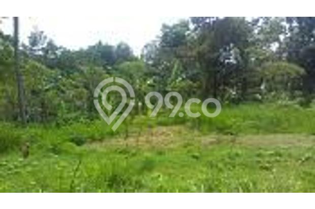 Tanah Kebun Produktif dan Tanah Kavling Pinggir Jalan Bintoro Jember 16510277