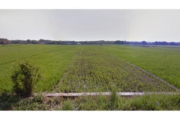 WA 087836460238, Jual Beli Tanah Jaten, Tanah Dijual Jaten 14 Hektar 10221207