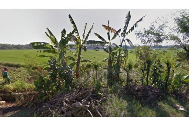 WA 087836460238, Jual Beli Tanah Jaten, Tanah Dijual Jaten 14 Hektar 10221209