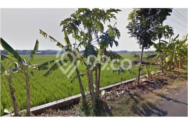 WA 087836460238, Jual Beli Tanah Jaten, Tanah Dijual Jaten 14 Hektar 10221210