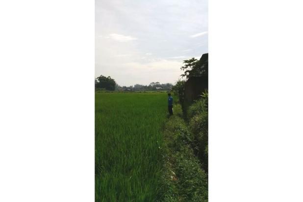 Tanah Subur untuk Pertanian Padi di Kecamatan Cilaku, Desa Sukasari Cianjur 5839652