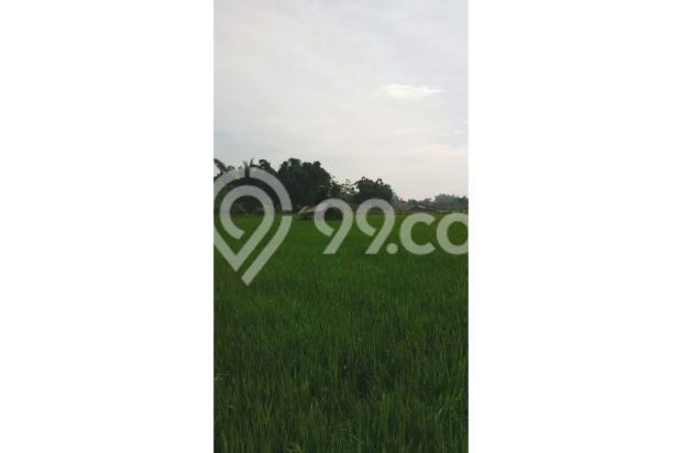 Tanah Subur untuk Pertanian Padi di Kecamatan Cilaku, Desa Sukasari Cianjur 5839654