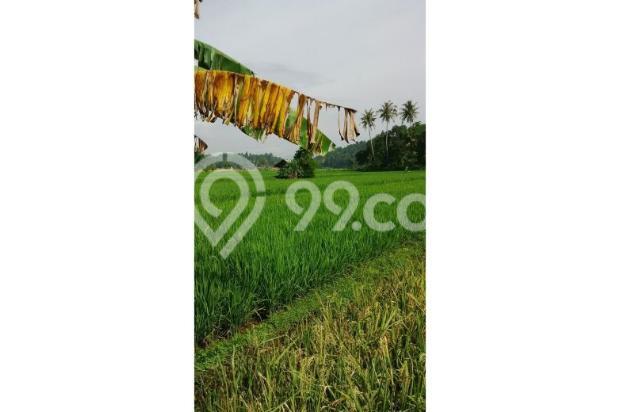 Tanah Subur untuk Pertanian Padi di Kecamatan Cilaku, Desa Sukasari Cianjur 5839656