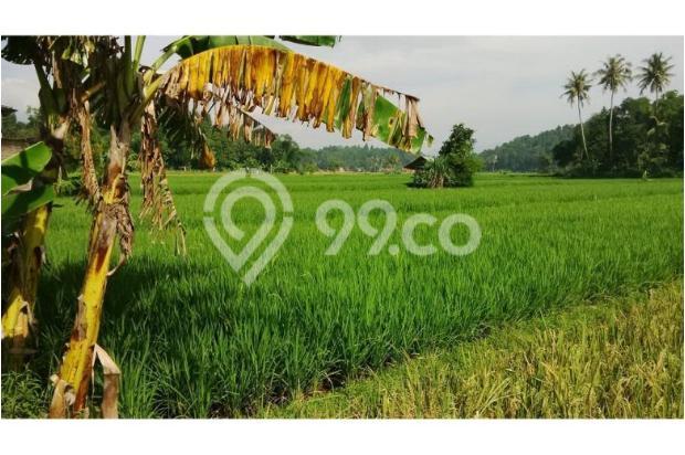 Tanah Subur untuk Pertanian Padi di Kecamatan Cilaku, Desa Sukasari Cianjur 5839655