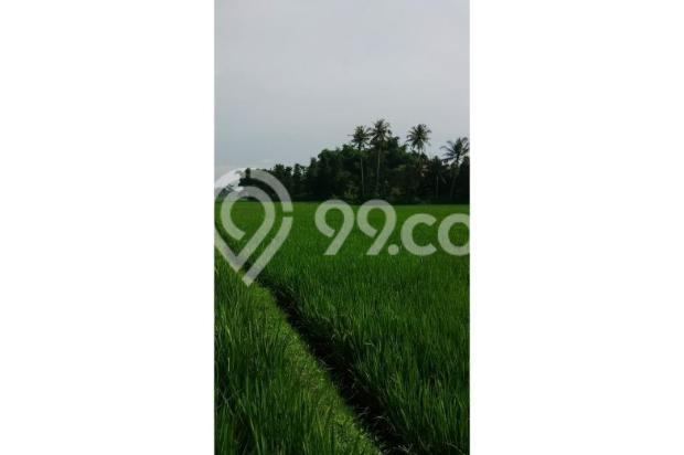Tanah Subur untuk Pertanian Padi di Kecamatan Cilaku, Desa Sukasari Cianjur 5839651