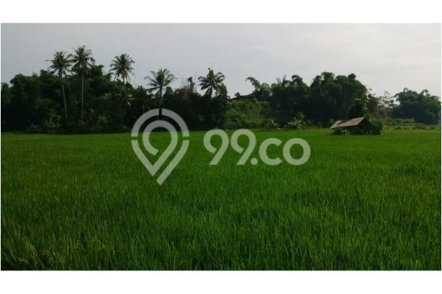 Tanah Subur untuk Pertanian Padi di Kecamatan Cilaku, Desa Sukasari Cianjur 5839653