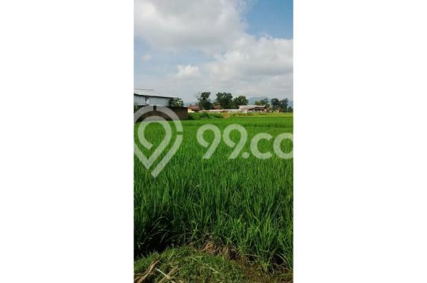Tanah Subur untuk Pertanian Padi di Kecamatan Cilaku, Desa Sukasari Cianjur 5839657