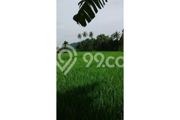 Tanah Subur untuk Pertanian Padi di Kecamatan Cilaku, Desa Sukasari Cianjur 5839658