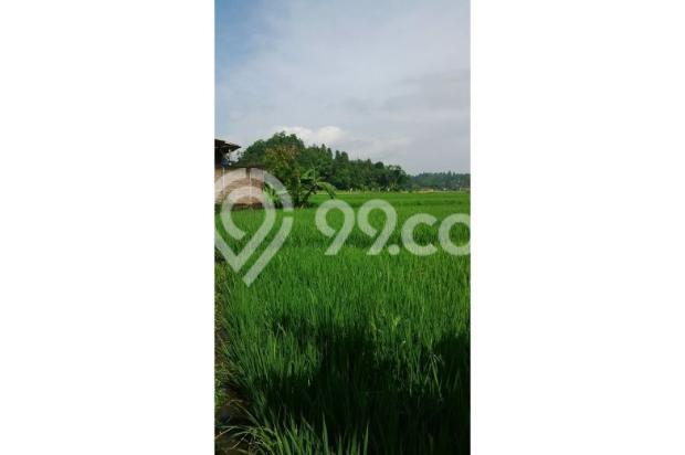 Tanah Subur untuk Pertanian Padi di Kecamatan Cilaku, Desa Sukasari Cianjur 5839662