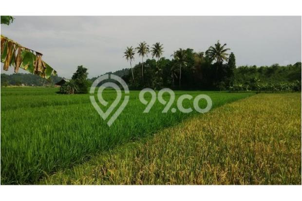 Tanah Subur untuk Pertanian Padi di Kecamatan Cilaku, Desa Sukasari Cianjur 5839659