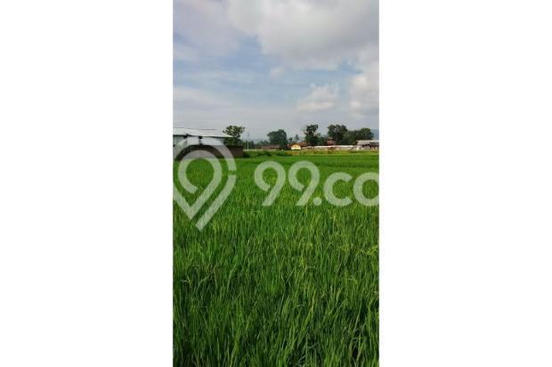 Tanah Subur untuk Pertanian Padi di Kecamatan Cilaku, Desa Sukasari Cianjur 5839663