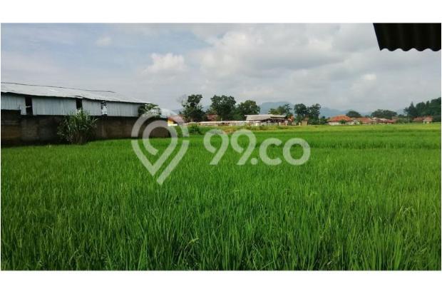 Tanah Subur untuk Pertanian Padi di Kecamatan Cilaku, Desa Sukasari Cianjur 5839660
