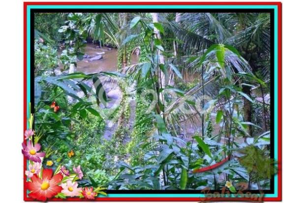 Magnificent, 7.800 m2 View tebing,sawah,sungai ayung di Ubud 3872428