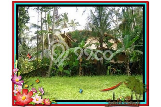 Magnificent, 7.800 m2 View tebing,sawah,sungai ayung di Ubud 3872429