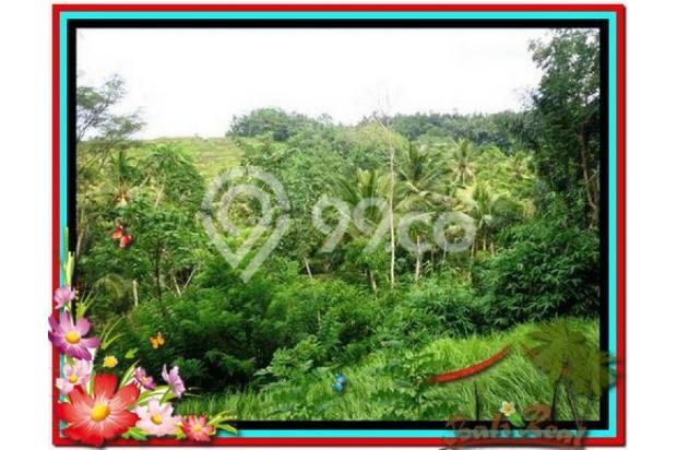 Magnificent, 7.800 m2 View tebing,sawah,sungai ayung di Ubud 3872430