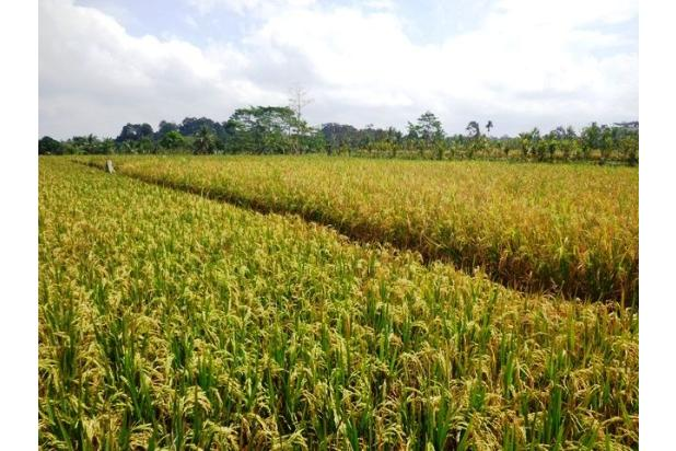Rp3,97mily Tanah Dijual