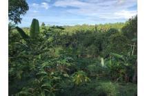 Tanah Kebun produktif Murah dekat objek Wisata Jatiluwih