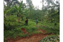 Tanah Kebun Dijual Murah Di Jonggol Bogor