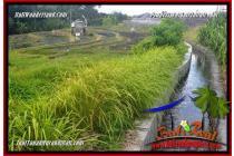 Tanah Murah view sawah lingkungan villa di Canggu Brawa