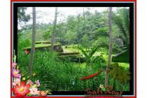 Fantastic, 430 m2 View sawah sungai linkungan villa di Ubud Payangan