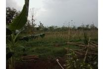 Tanah-Subang-1
