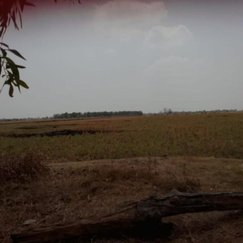 Tanah Sawah Strategis Dekat Jalan Raya Gabus