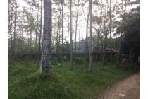Tanah Dijual Bogor Murah dan dekat tempat Wisata