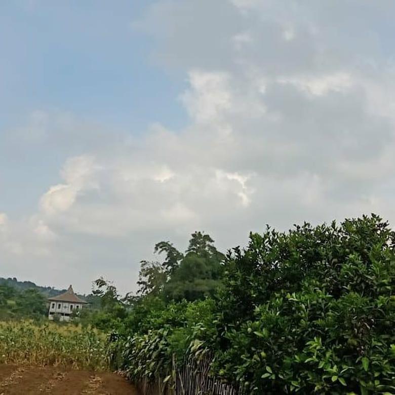 tanah produktif tanaman jeruk di kota batu