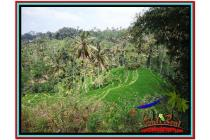 Tanah Super Prospektif Spesial 12.000 m2 Ubud Tampak Siring YUB520