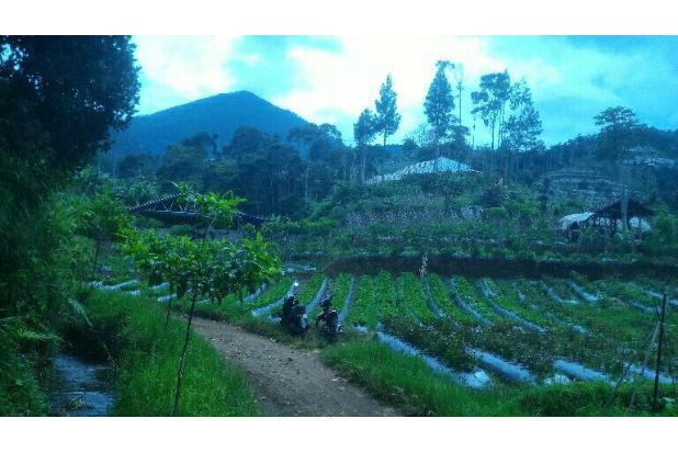 tnh 220rb/m LT.3000m tuk kebun di cibodas maribaya lembang . 15423389
