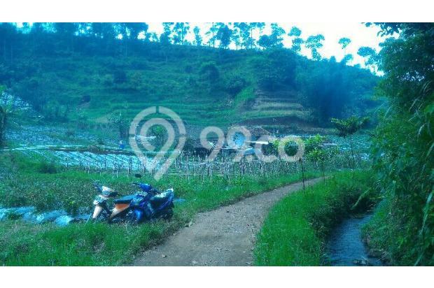 tnh 220rb/m LT.3000m tuk kebun di cibodas maribaya lembang . 15423393