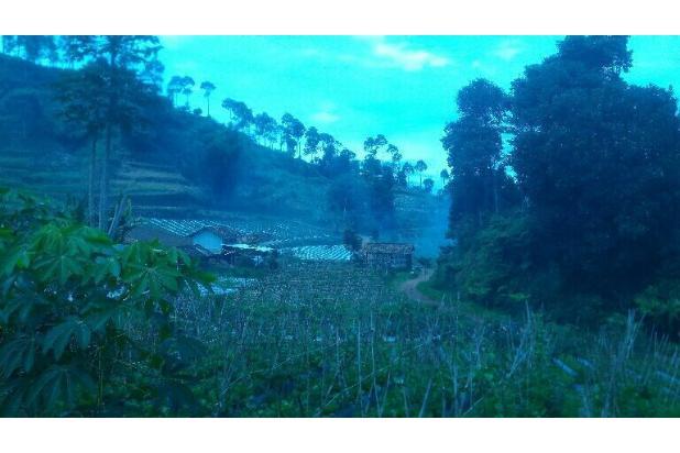 tnh 220rb/m LT.3000m tuk kebun di cibodas maribaya lembang . 15423395