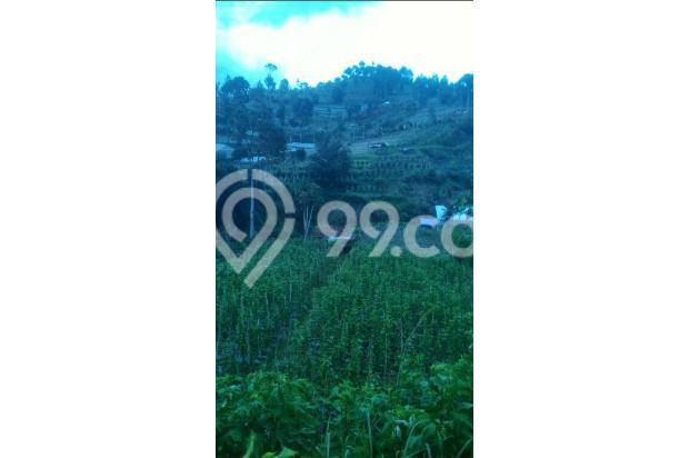 tnh 220rb/m LT.3000m tuk kebun di cibodas maribaya lembang . 15423420