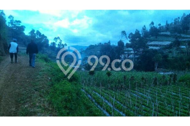 tnh 220rb/m LT.3000m tuk kebun di cibodas maribaya lembang . 15423423