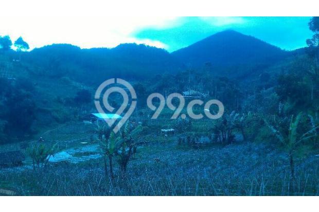 tnh 220rb/m LT.3000m tuk kebun di cibodas maribaya lembang . 15423424