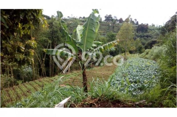 Dijual murah Tanah di Cisarua Bandung, Tanah luas Dijual di Cimahi 10971643