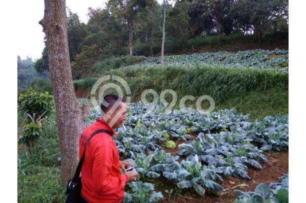 Dijual murah Tanah di Cisarua Bandung, Tanah luas Dijual di Cimahi 10971645