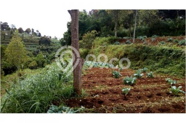 Dijual murah Tanah di Cisarua Bandung, Tanah luas Dijual di Cimahi 10971647