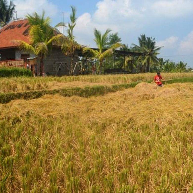 Tanah Prospek View Sawah lingkungan Villa di Ubud Tegalalang