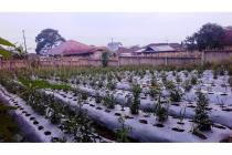 Tanah Kavling Cikole Lembang