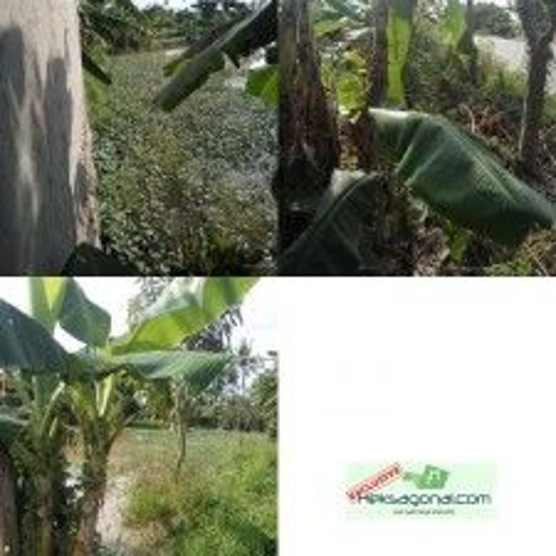 Tanah Dijual Mauk, Tangerang, Banten hks4483