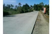 Tanah perkebunan di jln Trans (200-300 phon kelapa)