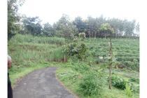 Tanah 5 Ha Mundusewu Bareng Jombang SHM Murah (BU)