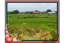 Investasi Properti, 5.000 m2  View sawah dan gunung di Ubud TJUB474
