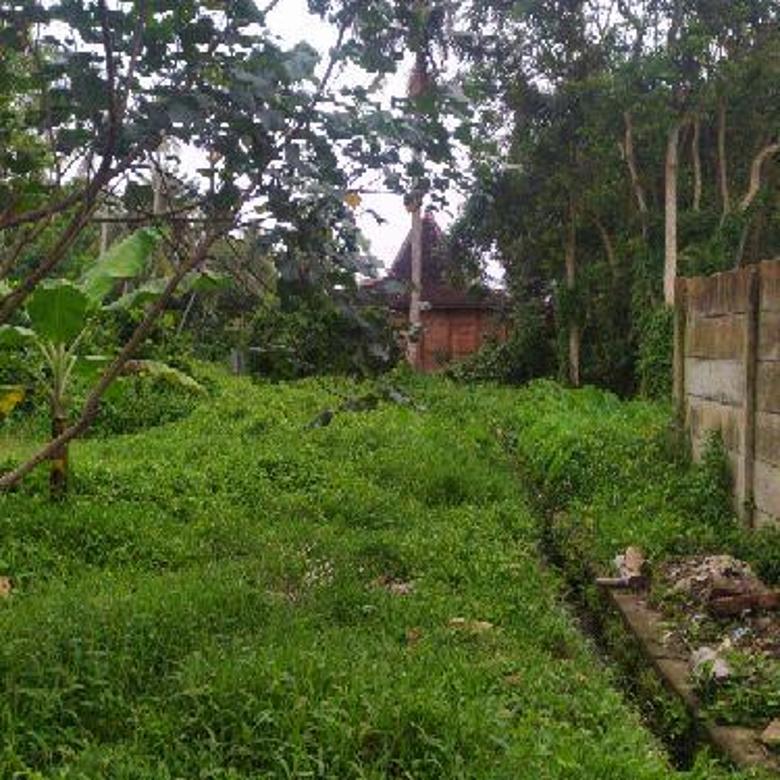 Tanah di tengah sawah view jungle sungai kecil