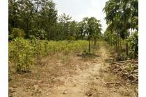 Tanah Pekarangan DiKota Blitar