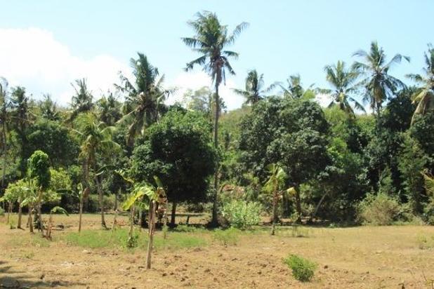 Rp31,5mily Tanah Dijual